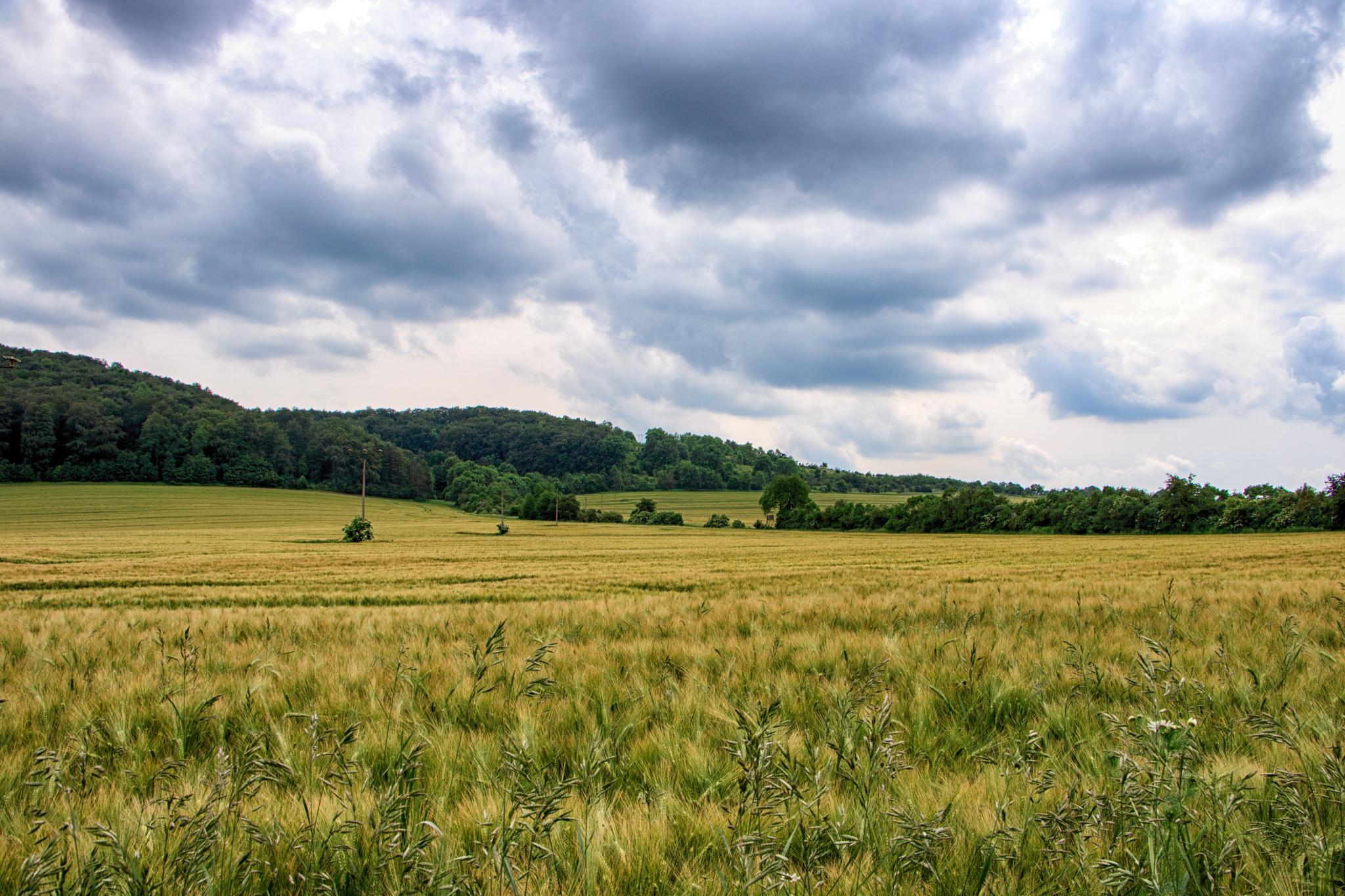 Felder entlang der Werra zwischen Creutzburg und Mihla