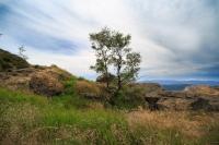 Das Steinbühler Gesenke mit einer wilden Landschaft