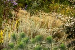 Dicht bewachsen trotz Hitzesommer. Aber Artemisia und Nasella können das ab.