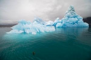 Nochmal der Eisberg vom vorigen Beitrag. Wie klar das Wasser war, kann man an dem Stück Tang erkennen.
