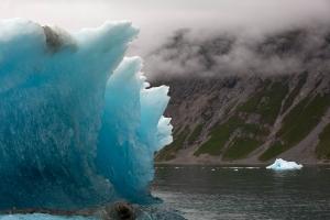 Eisbergblume vor Steilwand