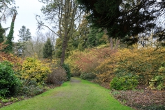 Hamamelis-Pfad (Arboretum Kalmthout)