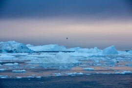 Abenddämmerung an den Eisbergen von Ilulissat