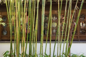 Bambus vor einem der Gebäude