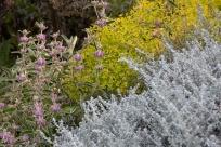 Laubkombination mit Phlomis purpurea und Euphorbia