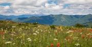 Blick zum Mt. St. Helens