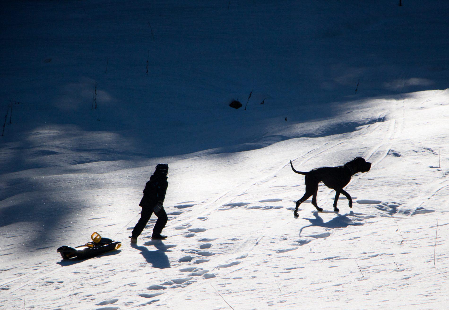 Hund, Schnee
