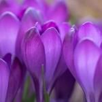 Photo: Hocus Pocus, der Frühling ist da!