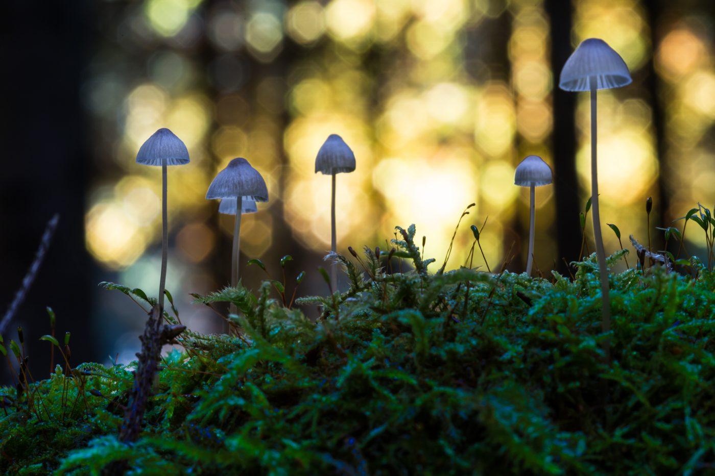Pilz Makro Moos im Wald