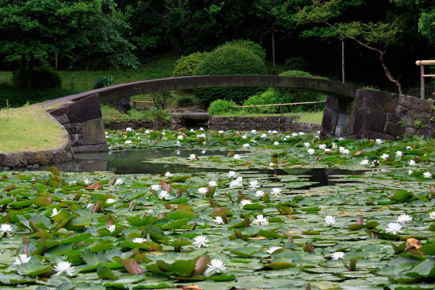 Koishikawa Koraku-en Tokyo Kleiner See Seerosen
