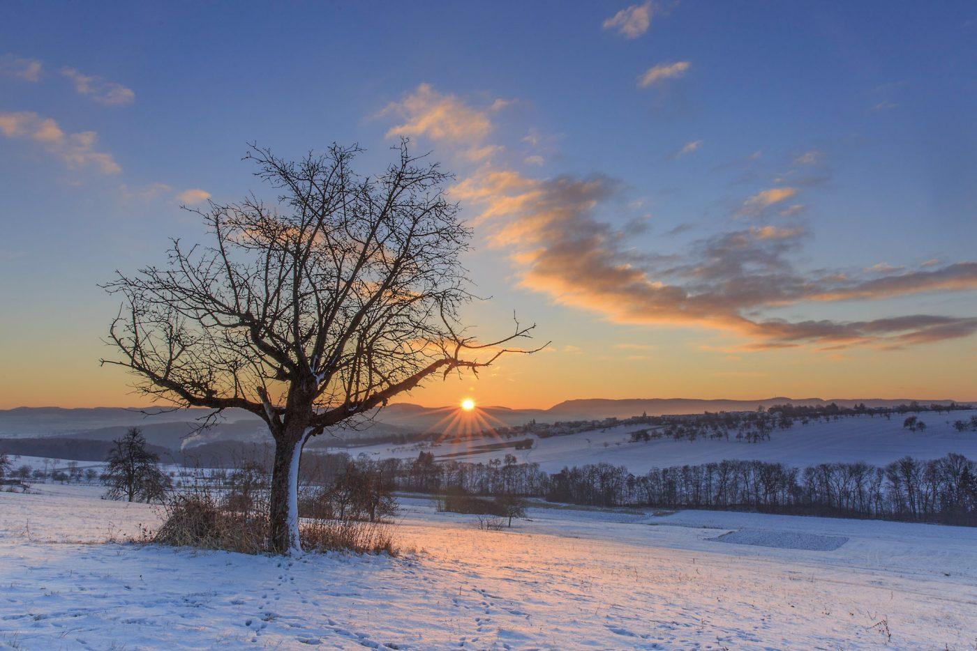 Baum im Schnee bei Sonnenaufgang, Alb