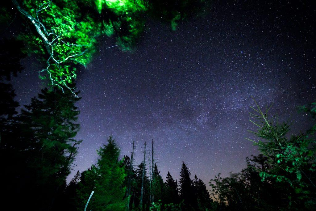 Sterne Zwischen Den B 228 Umen Sylvia Knittel