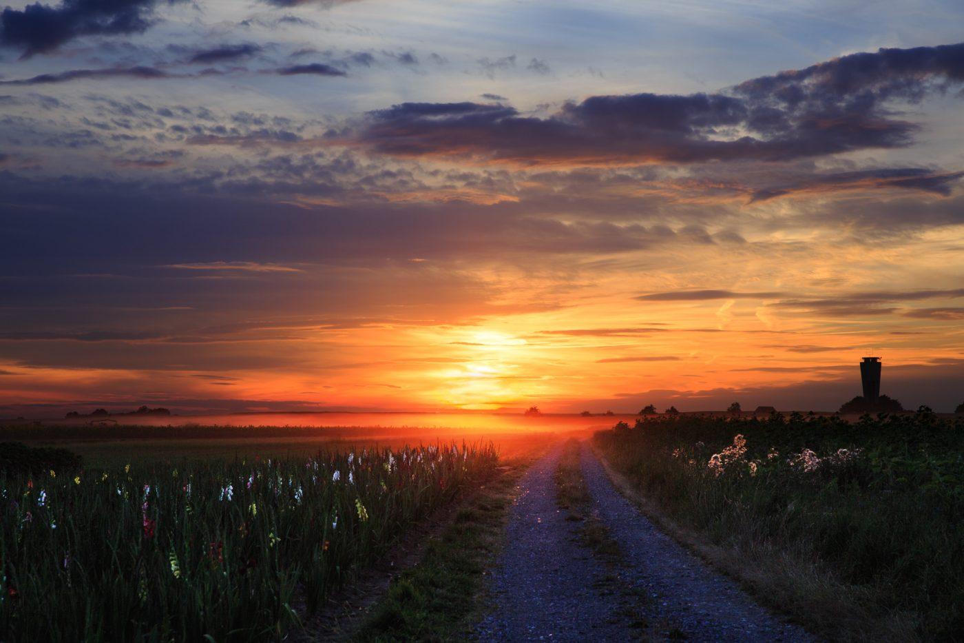 Sonnenuntergang in Altdorf auf dem Feld, Gladiolen