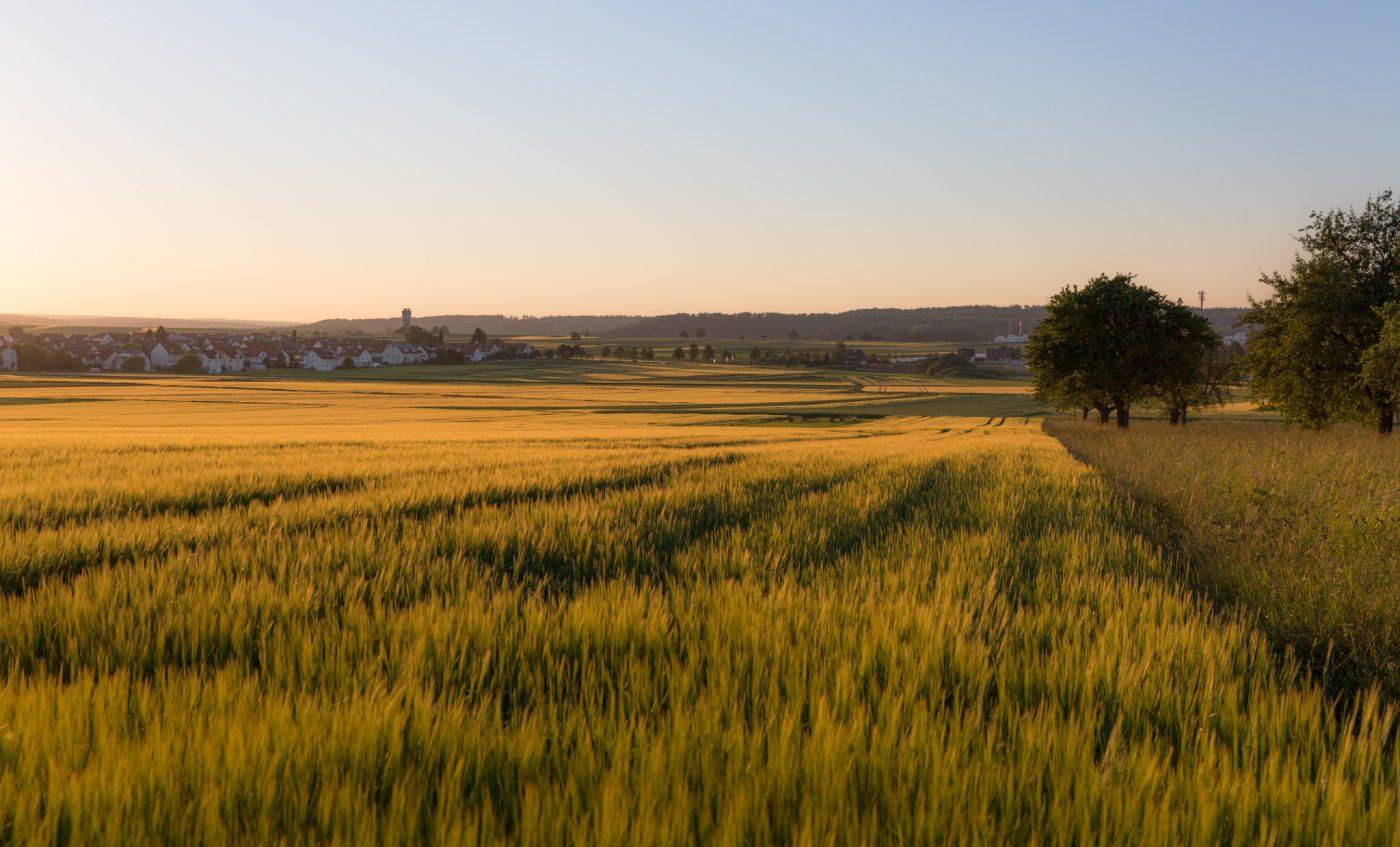 Blick nach Altdorf, Felder, Abendsonne
