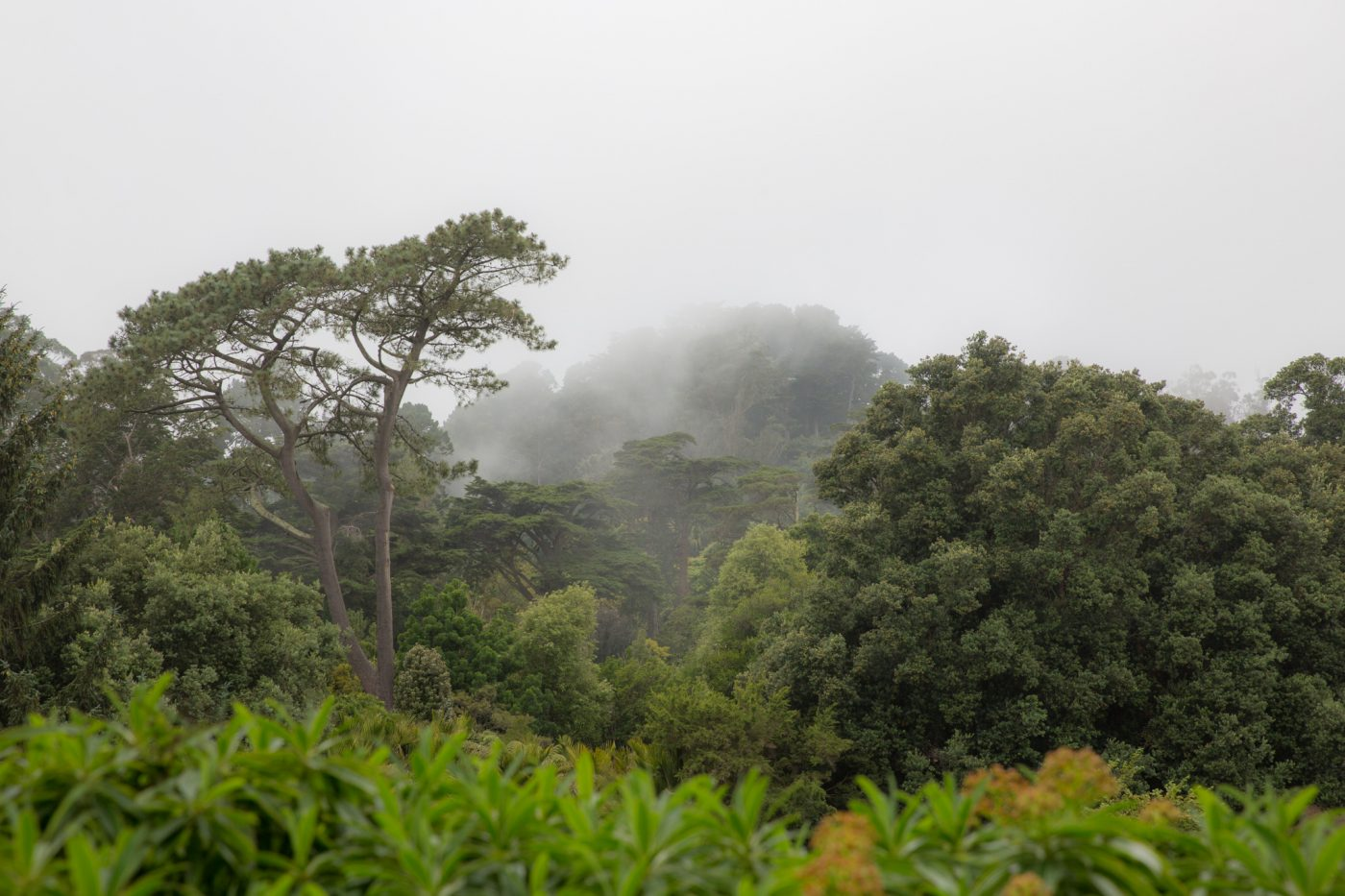 Photo: Not Gondwana: The fog comes rolling in