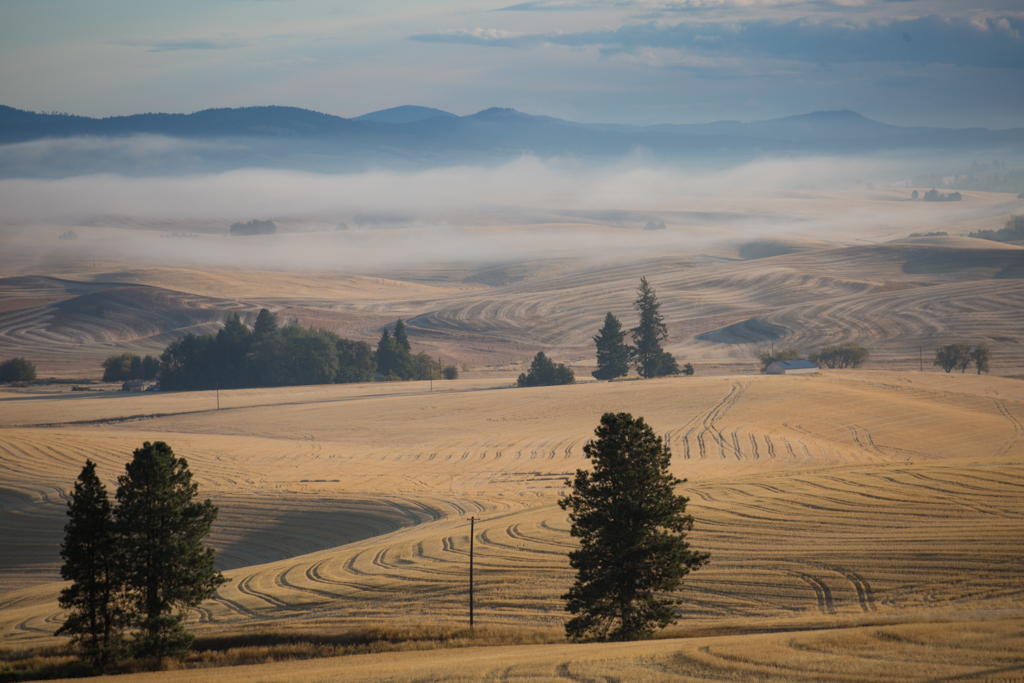 Nebel in den Golden Hills, Palouse, Washington