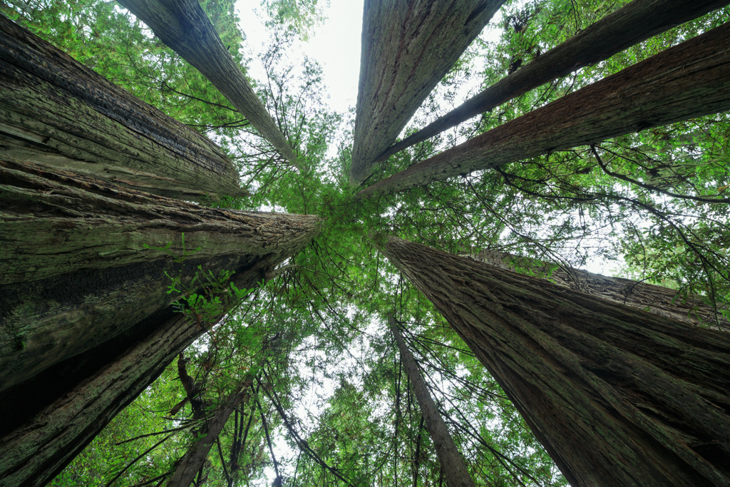 Redwood Nationalpark Sequoia sempervirens Himmel