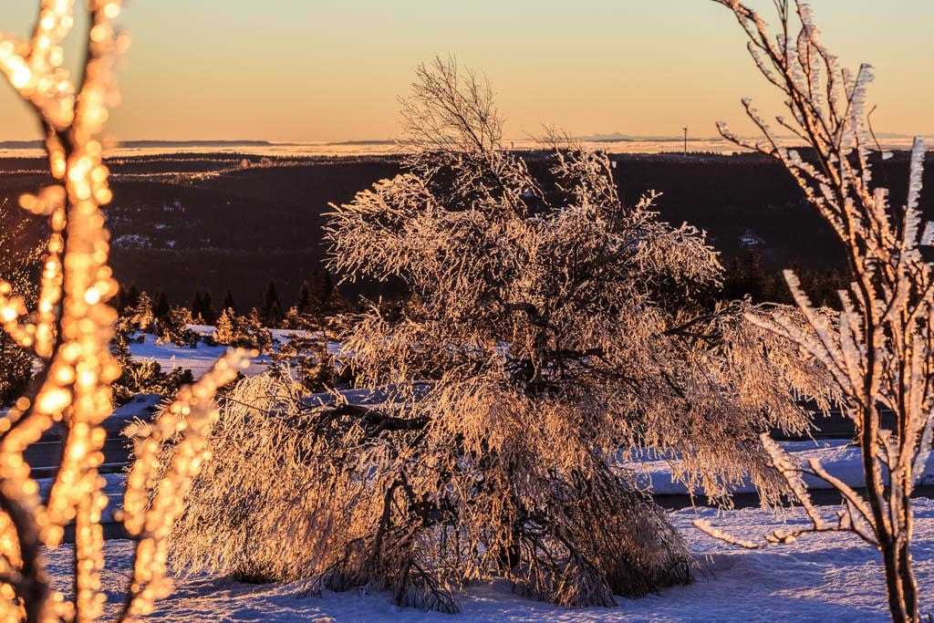 Morgenlicht Vereister Baum im Schwarzwald