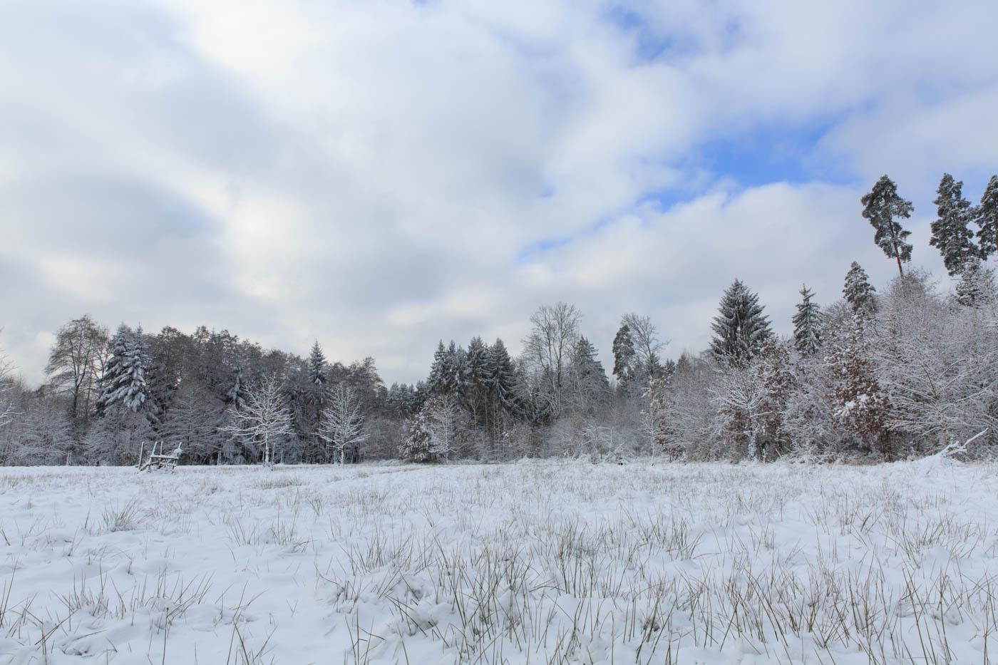 Frischer Schnee im Schönbuch