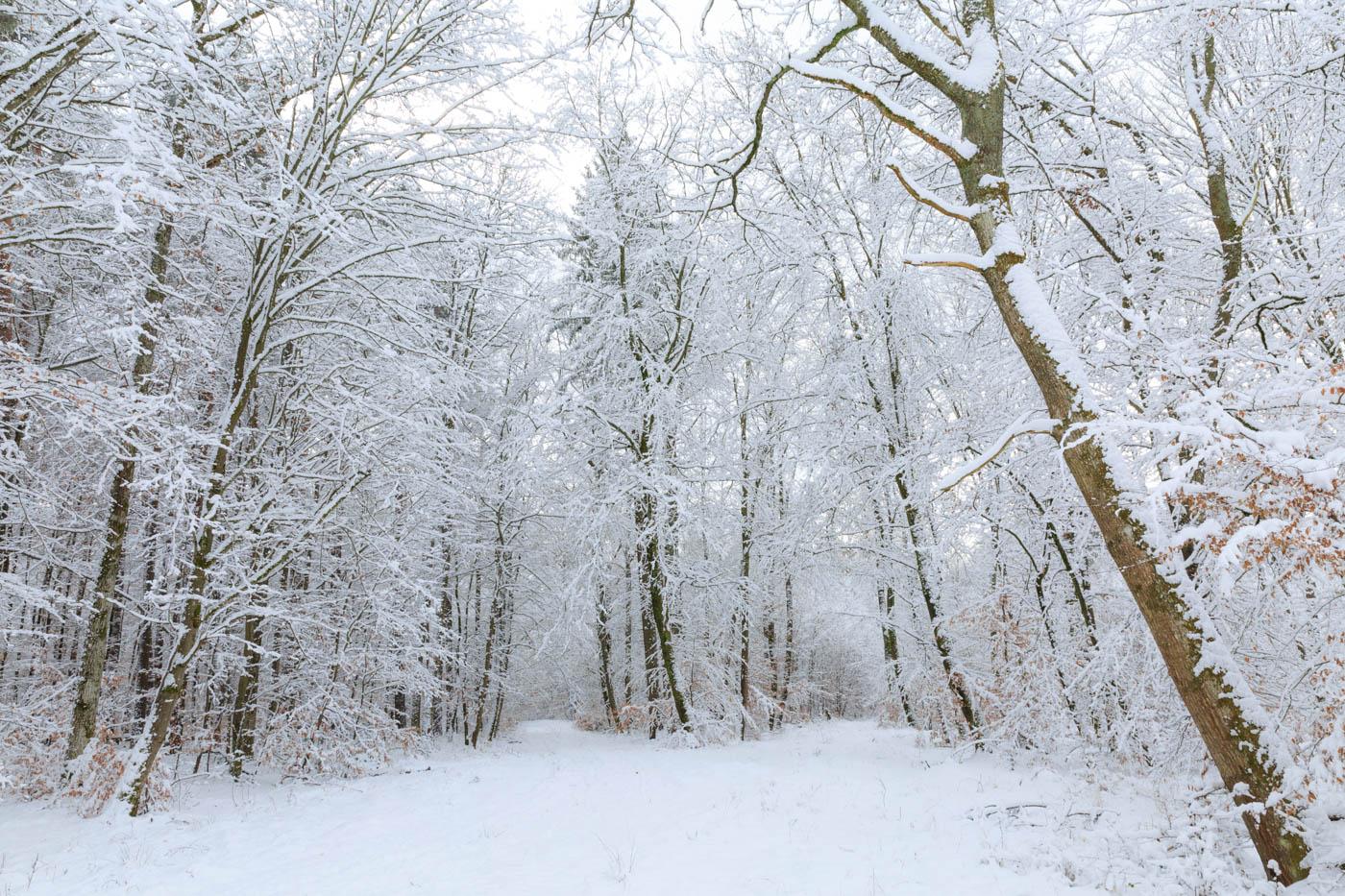 Frischer Schnee im Schönbuch, Wald, Bäume