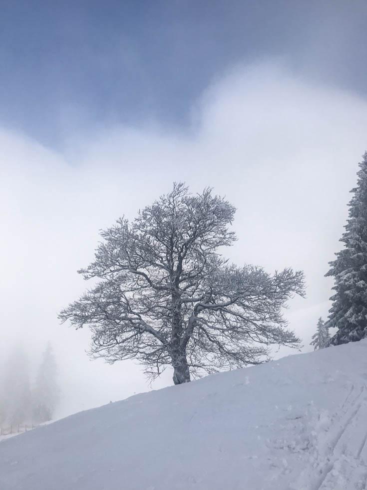 Mit Rauhreif vereister Baum im Allgäu