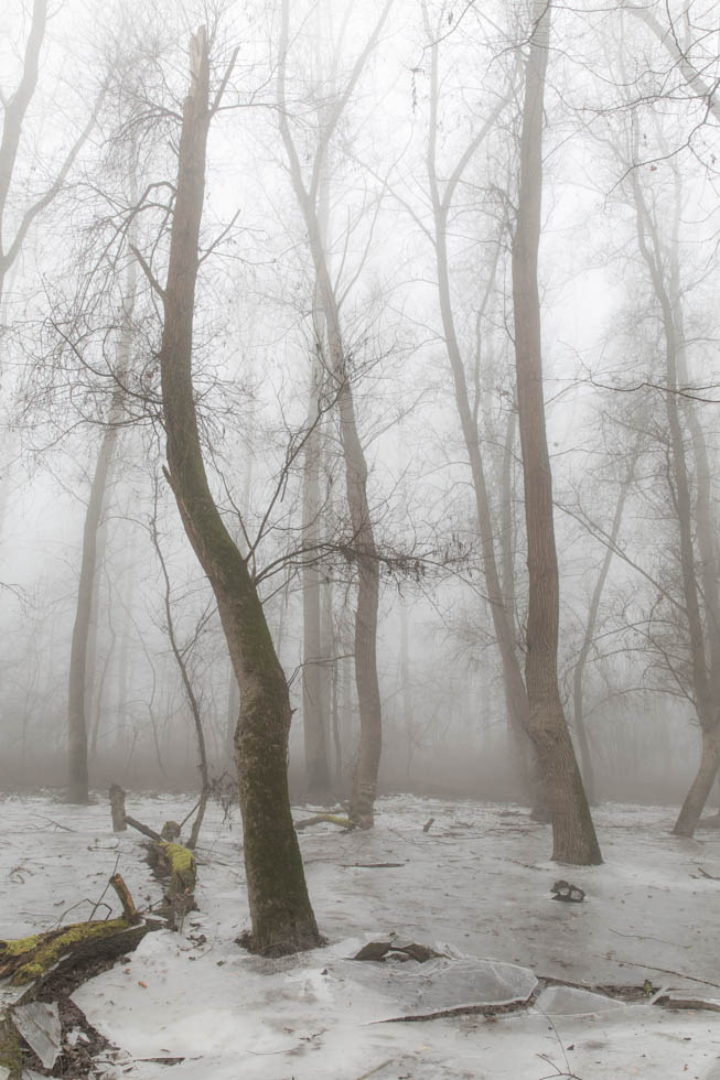 In Nebel und Eis entlang des Rheinufers