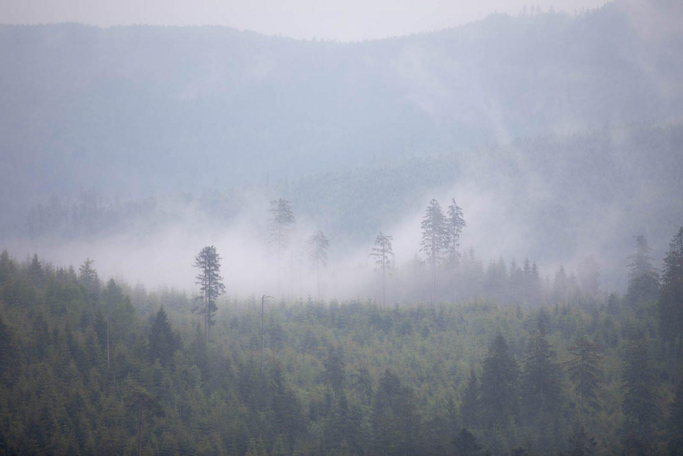 Nebelschwaden - Schwarzwald, nicht Ruwenzori