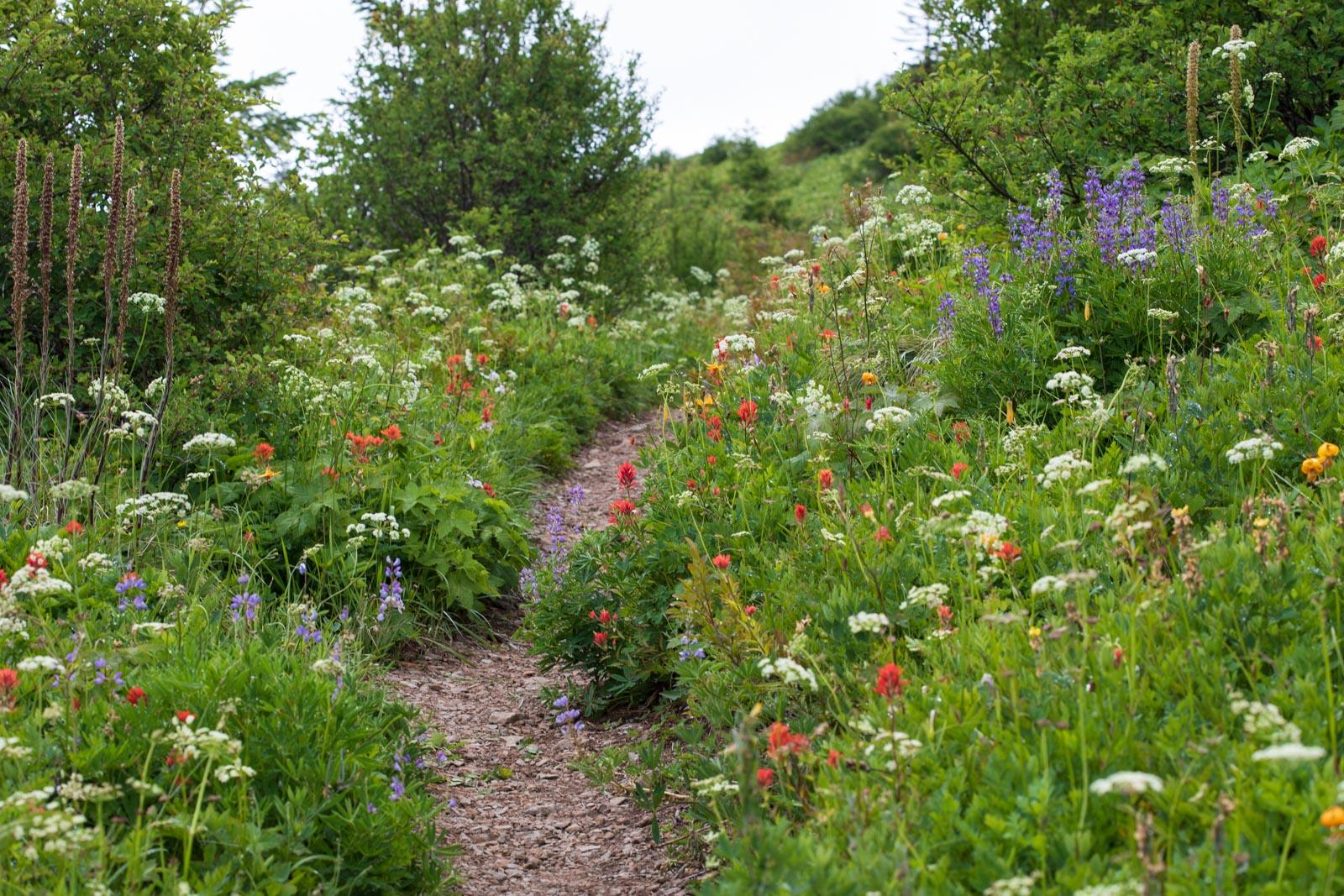 hiking path, meadow, Silver Star Mountain, Washington,