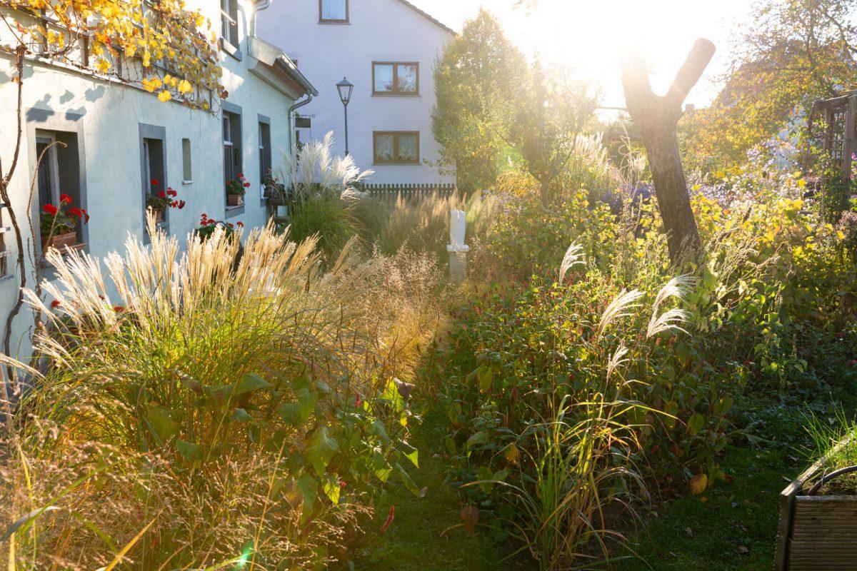 Gräserpfad im Gegenlicht, Garten Schneider Pecoraro-Schneider