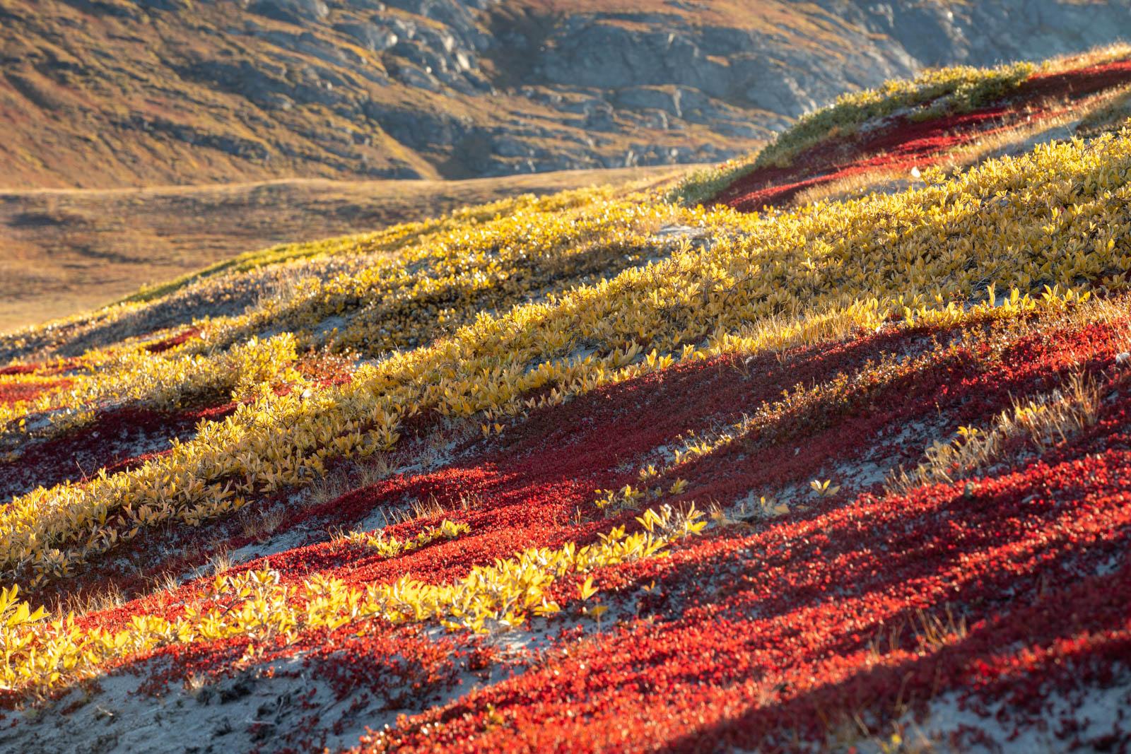 Photo: Gelb und rot leuchten