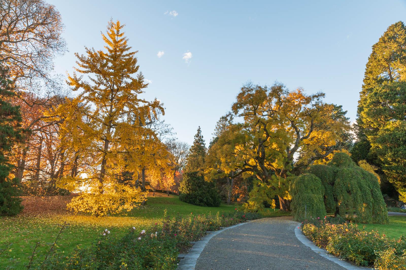 Photo: Sonnenuntergang im Arboretum