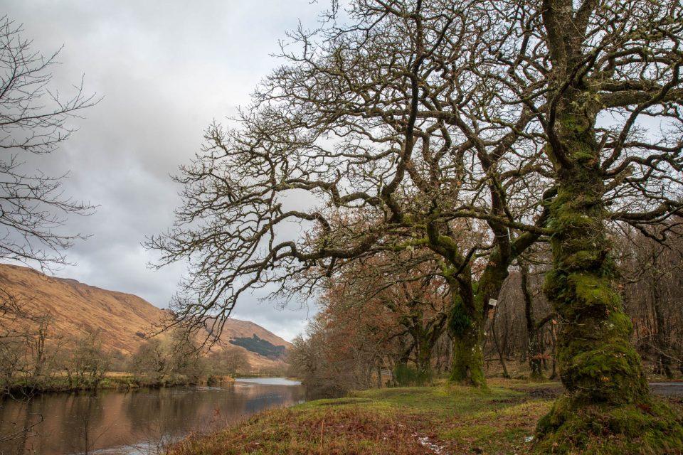 Glen Orchy mit alten Eichen am Orchy River, Schottland im Winter