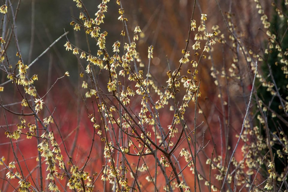 Photo: Winterfarben im Garten