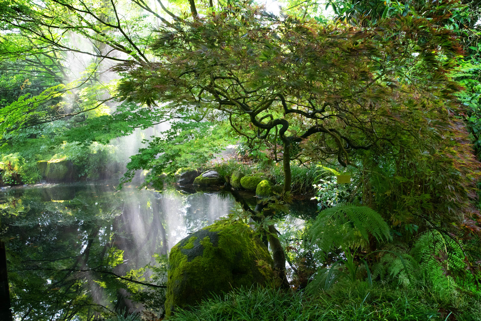 Botanischer Garten San Francisco, japanischer Garten, Teich