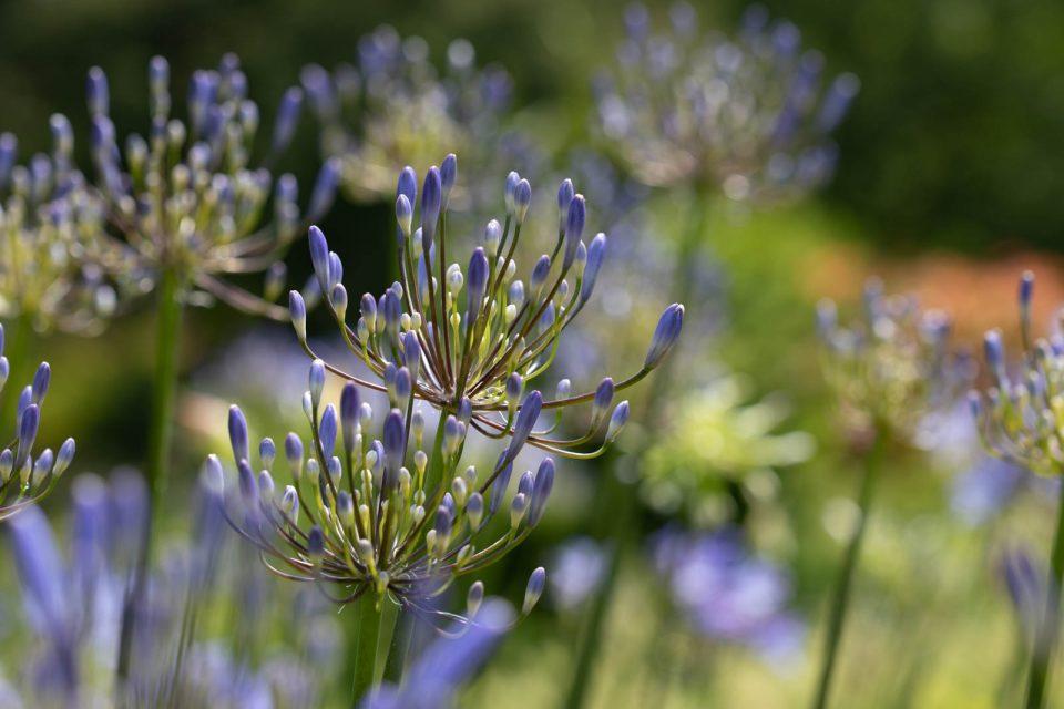 Photo: Der botanische Garten San Francisco im Juli