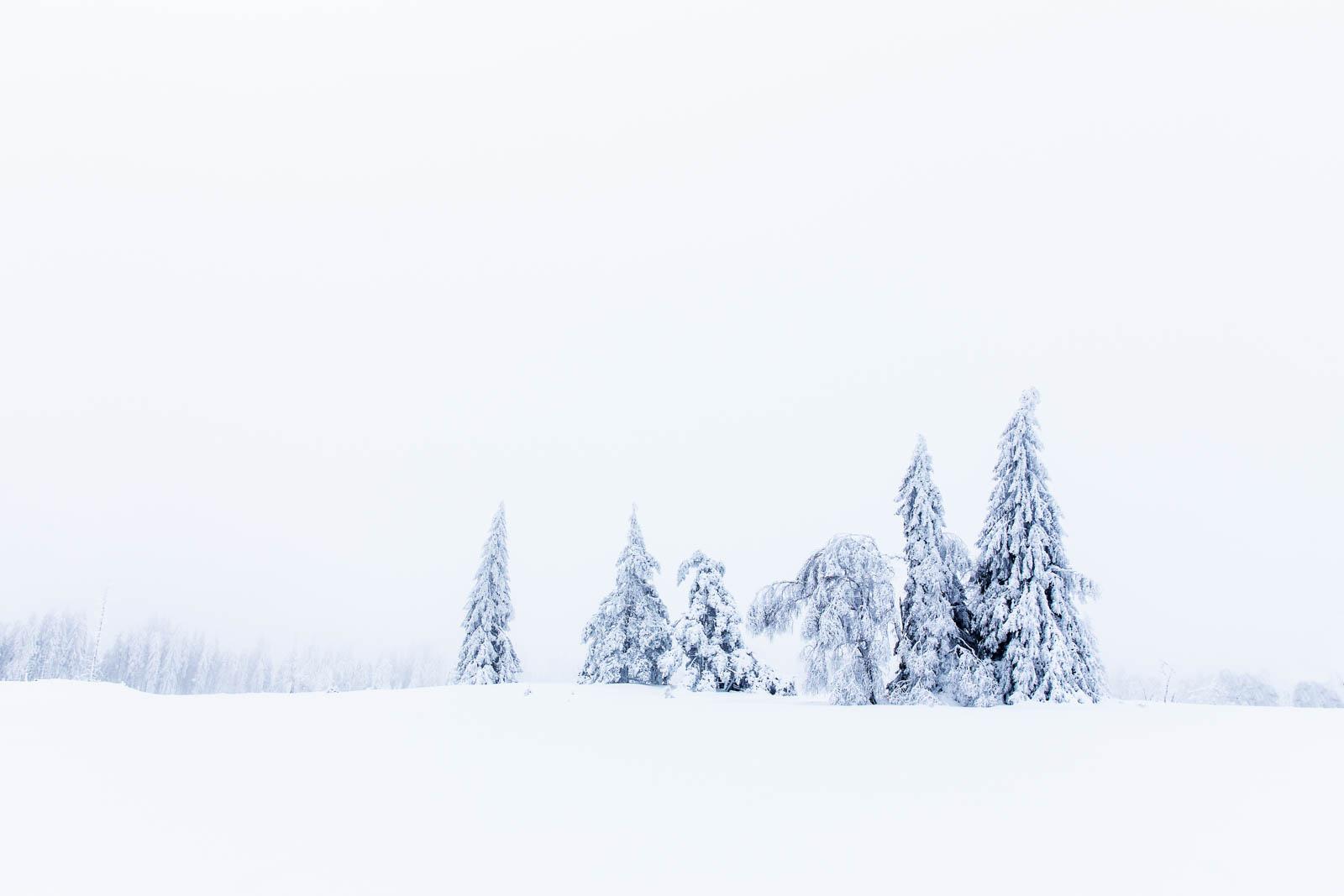 Whiteout im Schwarzwald Schnee Bäume