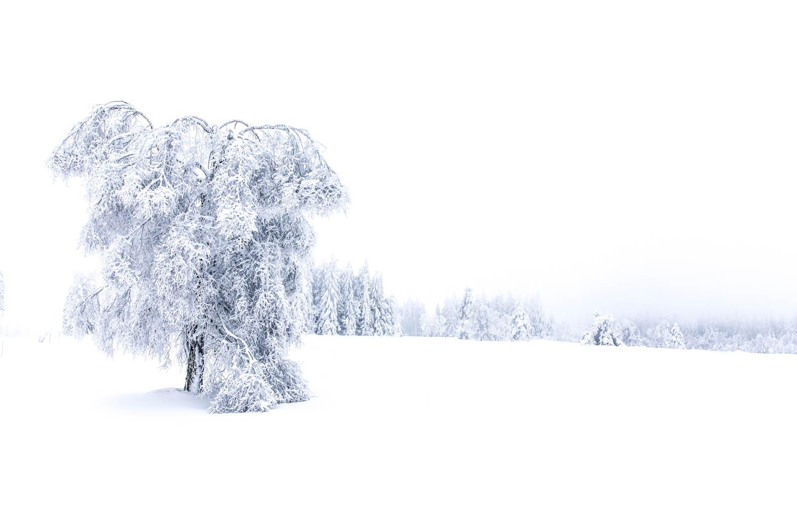 Whiteout im Schwarzwald, Baum, Schnee, Frost