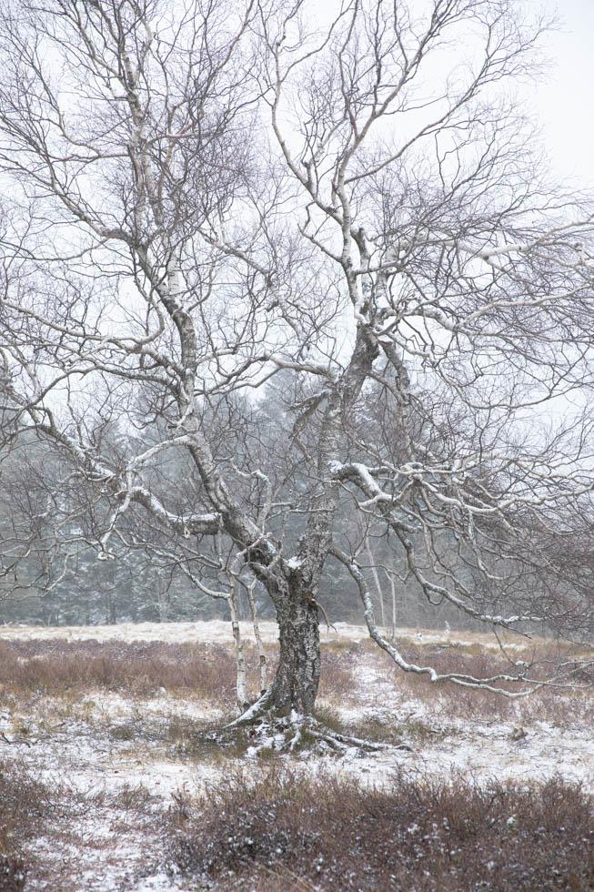 Photo: Der Schnee war eine Zierde auf den Bäumen