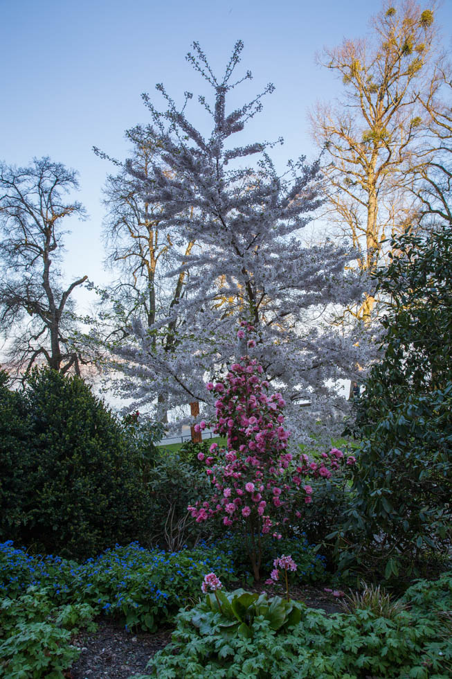 Photo: Tolle Kombination aus Prunus und Camelia