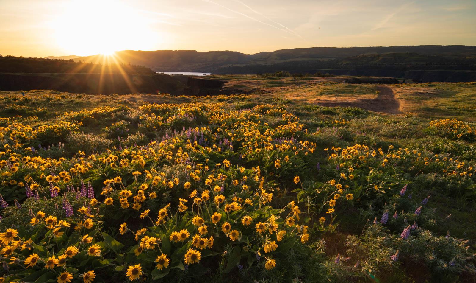 Sonnenuntergang Rowena Crest, Oregon,