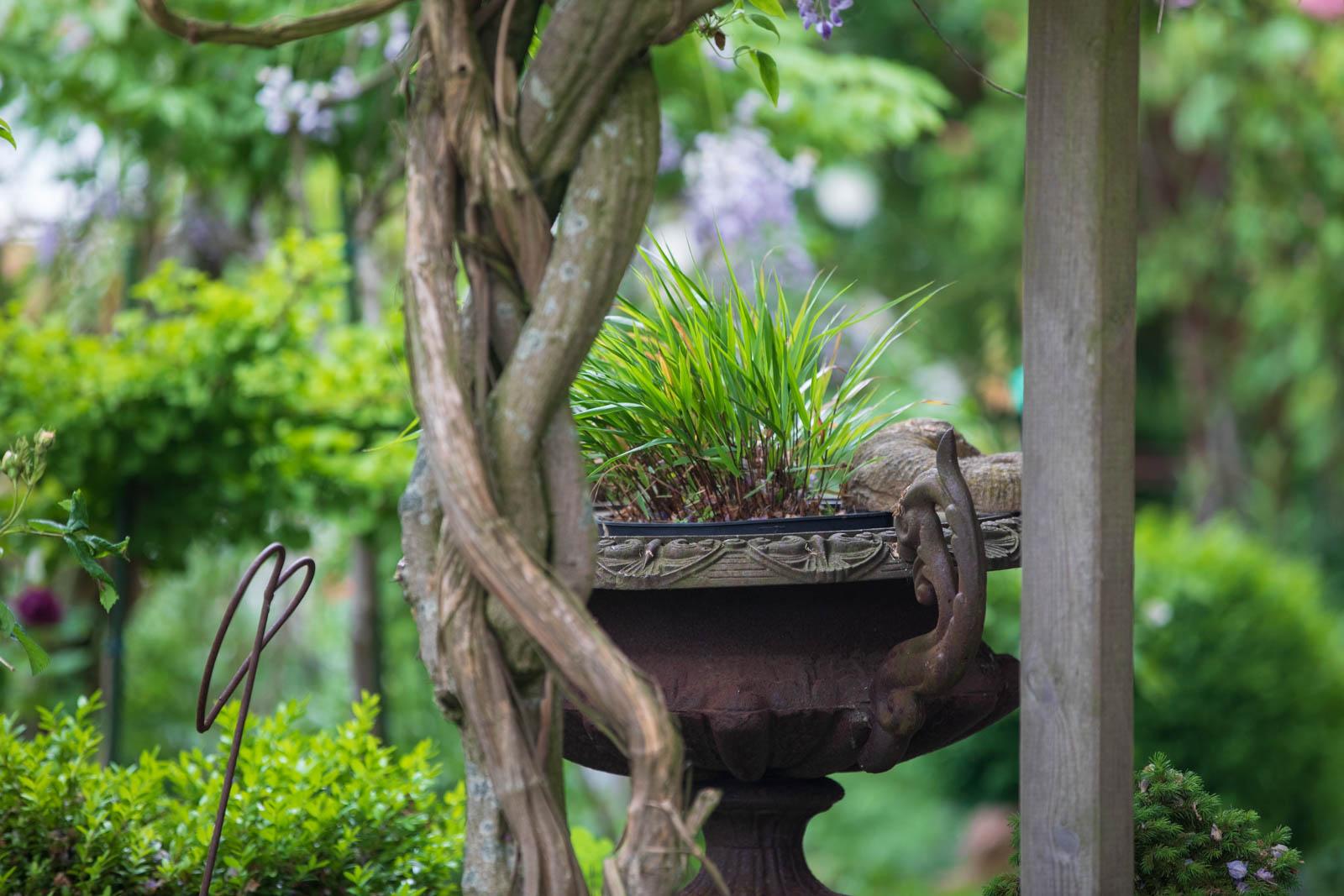 Foto vom Garten Astrid Guhl, Rosenparadies, Wilhelmshaven, Ostfriesland