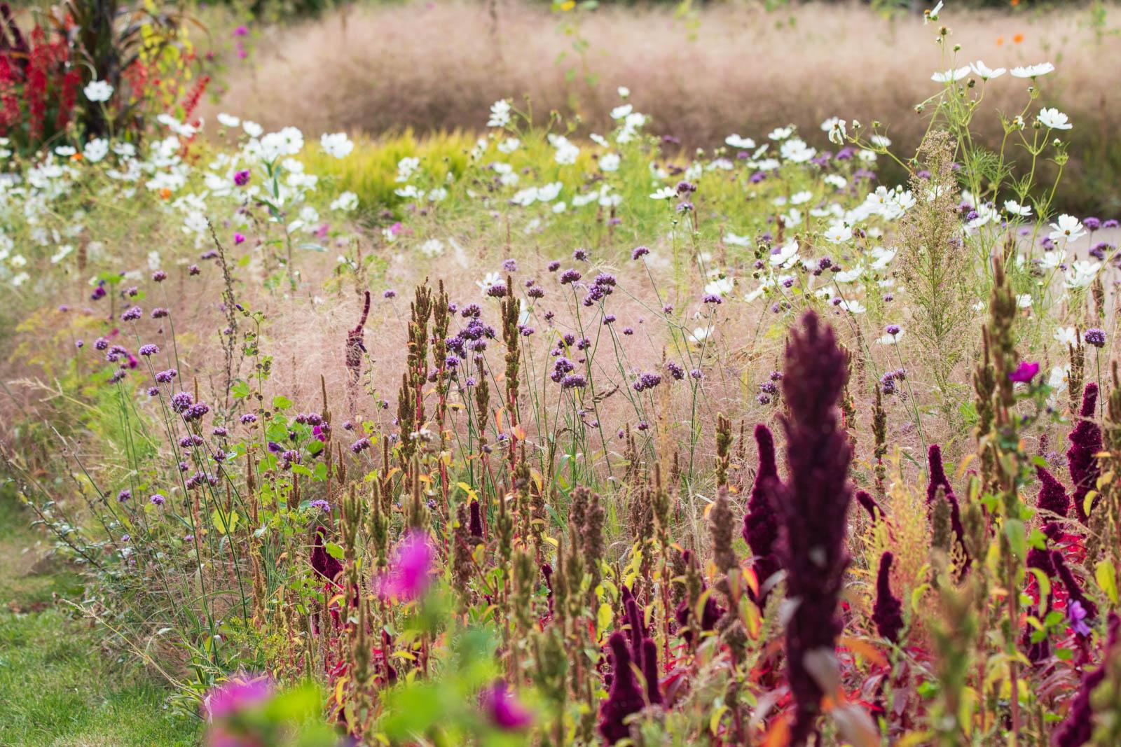 Gärten der Welt, Berlin Marzahn, Saat-Beet mit Amaranthus, Verbena bonariensis und Coreopsis