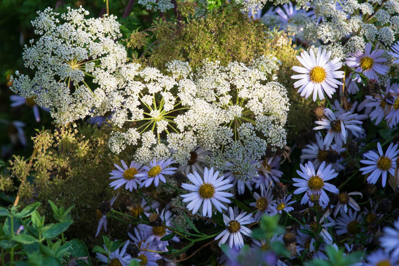 Photo: Wie ein Blumenstrauß