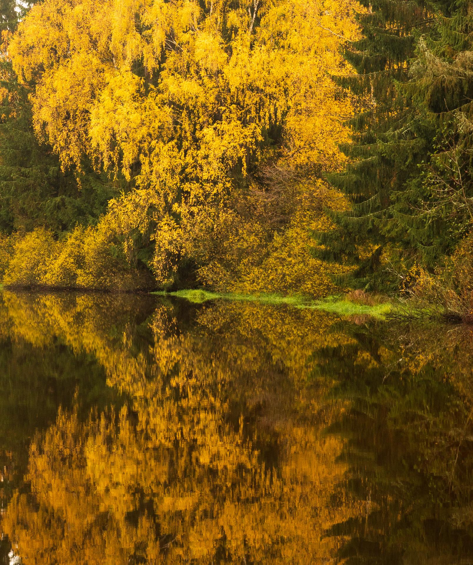 Photo: Das Herbstlaub leuchtet