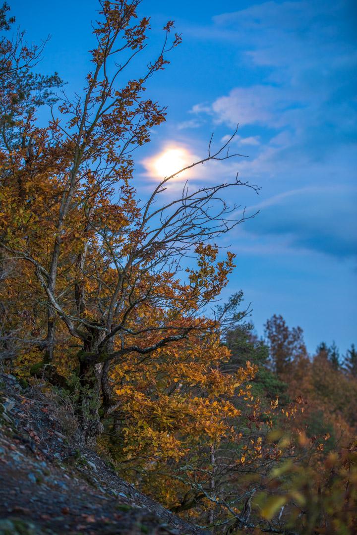 Photo: Mondstimmung