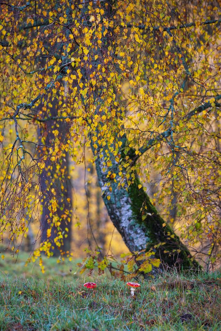 Photo: Zauberhafte Herbstkombi