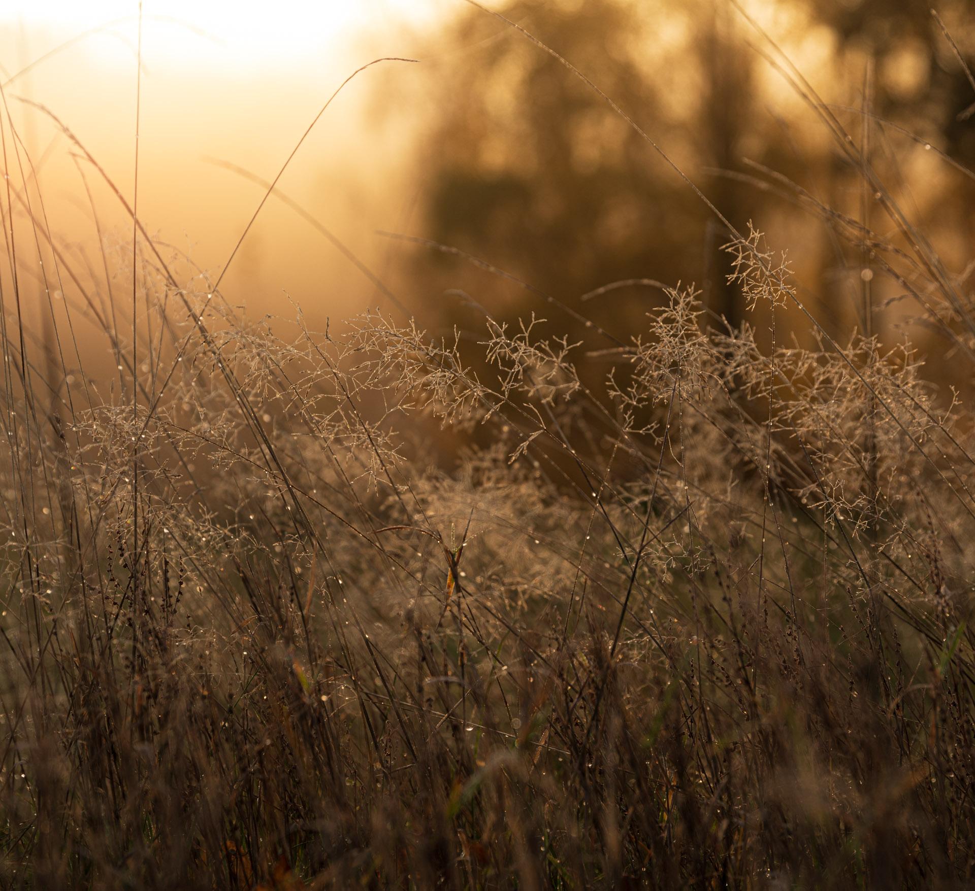 Photo: Frost in der Wiese
