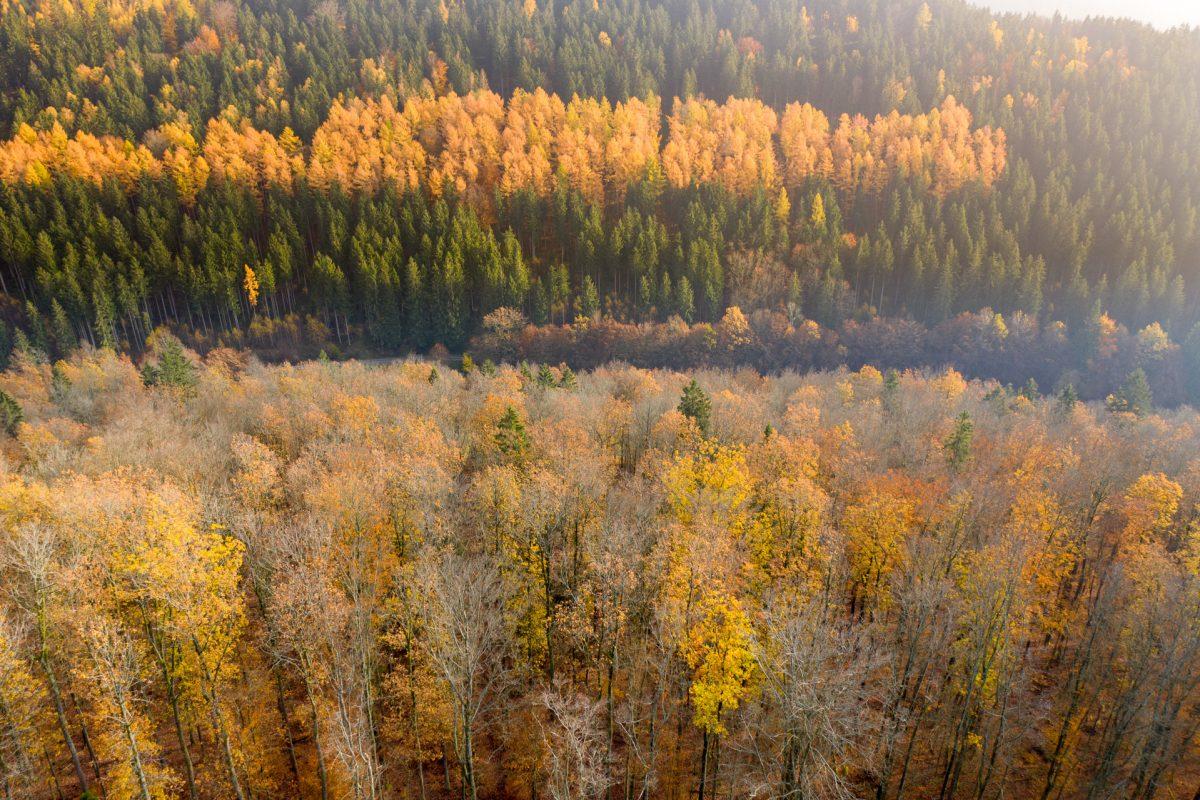 Mavic 2 Pro, Drohne, Thüringer Wald im Herbst mit gelbem Laub