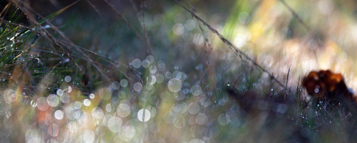 Photo: Auswahl einer Fotokamera und Einstellungen zum Fotografieren im Garten