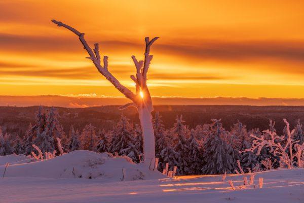 Schwarzwald Bäume im Schnee im Sonnenaufgang